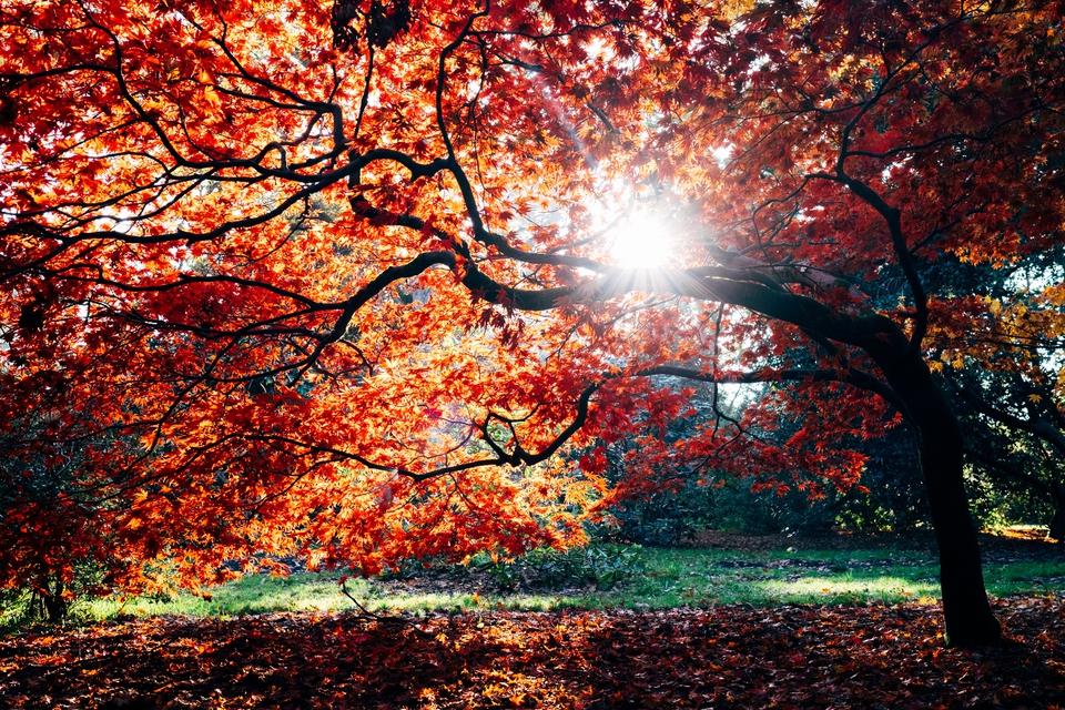 Coeden hydref Autumnal tree
