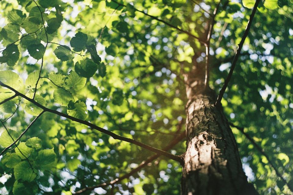 Dail Leaves
